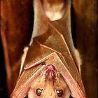 Hang in there! by Greg Parfitt