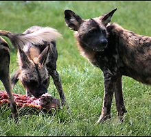 Hungry! Wild or not! by Greg Parfitt