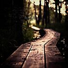 Swampy path by pawelmatys