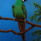 A Jubilant Green Macaw, All Alone by Kashmere1646