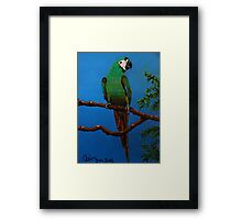 A Jubilant Green Macaw, All Alone Framed Print