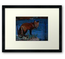 Mischievous, As In Fox Framed Print