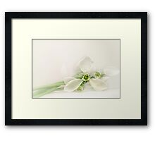 Just Snowdrops Framed Print