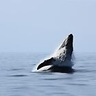 Whale Watching by Ticker