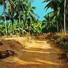Path through a coconut grove by Jasna