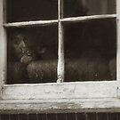 'Window Watchers' by Rondo93