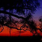 Everglades sunset by DrewK