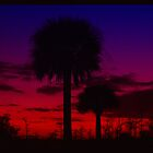 Palm tree sunset by DrewK