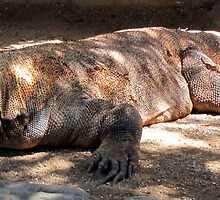 KOMODO DRAGON by springs