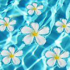 Frangipani flowers by Nasko .