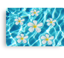 Frangipani flowers Canvas Print