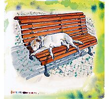 dog on bench Photographic Print