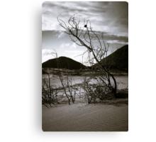 Beachfront Bushes 2 Canvas Print