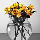 Faded Roses by Glenn Cecero