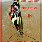 Banner for a challlenge in Natures Photography Group by Rocksygal52