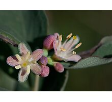 A tiny little flower Photographic Print