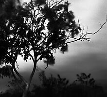 SOMBRE by AlejandroVera