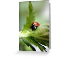 Ladybug on leaf Greeting Card