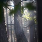 Katie Melua - Spiders Web .  by The Saint.  Featured in Canon…Favorites: 1 Views: 154 . Thx! by © Andrzej Goszcz,M.D. Ph.D