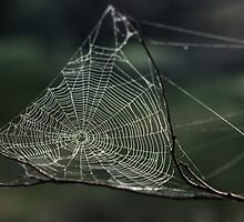 Spider's web Northam Toodyay 198208140003 by Fred Mitchell
