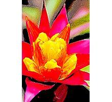 Red Orange Flower 2 Photographic Print