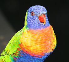 Rainbow Lorikeet Portrait #2 by Carole-Anne
