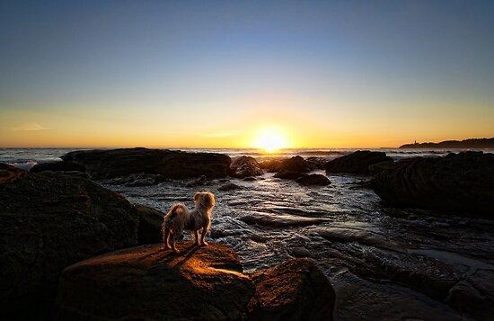 Sun Worshipper by Tam  Locke
