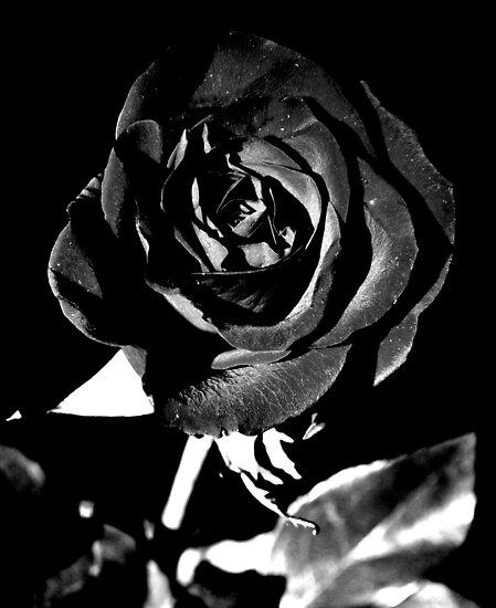 fleur noir et blanc by robin lee redbubble. Black Bedroom Furniture Sets. Home Design Ideas