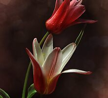 The Royal Tulips by EbyArts