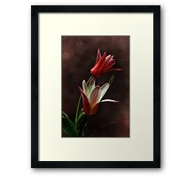 The Royal Tulips Framed Print