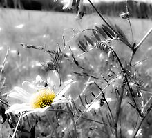 Hazy Daisy Fades Away by LadyEloise