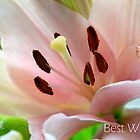 Best Wishes Flower Card by anchorsofhope