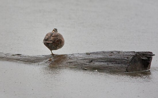 Weather for Ducks by smylie