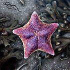 Starfish by Jessica Fittock