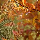 Web of Mellow Fruitfulness .. by Mike  Waldron