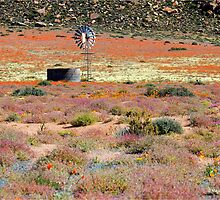 WHEN BEAUTY EXCEEDS METAL - Namaqua at it's best! by Magaret Meintjes