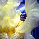 Snail and Iris by Ashqtara