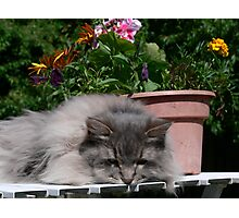 Sad Flower Cat Photographic Print