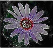 Dizzy Daisy Photographic Print