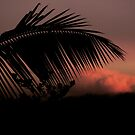 Tropical Silhouette 2 by Ellen Cotton