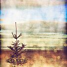 Christmas tree on an empty beach by Sharonroseart