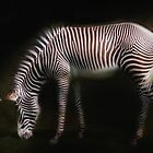 Grevys Zebra  by Elaine  Manley