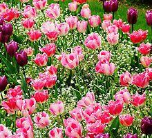 Paris Tulips by Trudi Skinn