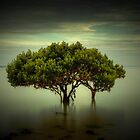 Mangrove Tree by Ian Stevenson