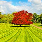 Red Tree On A Striped Lawn by delros