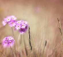 Bird's-eye primrose, textured. by Bigganvi
