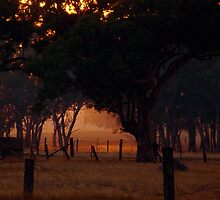 Smokey Dawn - Mt Barker, SA by Trudi Skinn