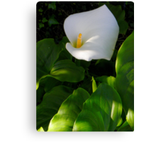 Calla and The Leaves Canvas Print