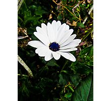 lonely flower Photographic Print
