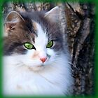 Green Glory:  Lacy by PatChristensen
